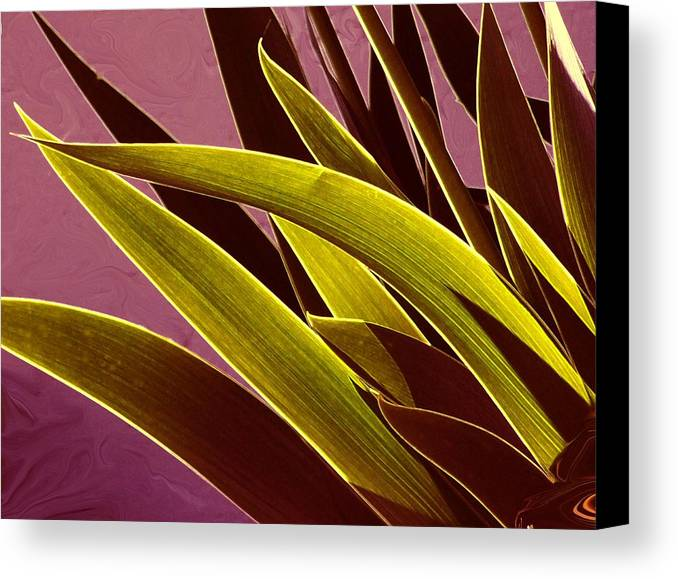 Leaves Canvas Print featuring the photograph Iris Art by Jim Darnall