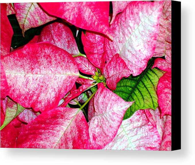 Christmas Canvas Print featuring the photograph It's Christmas by Mindy Newman