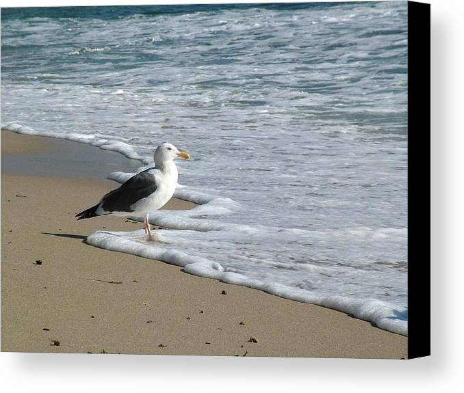 Seagull Canvas Print featuring the photograph Jonathan Seagull by John Loyd Rushing
