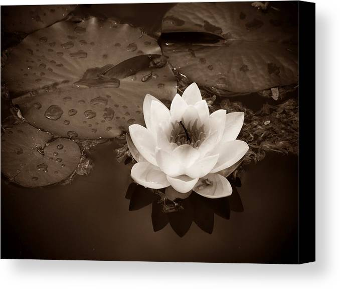 Lily Canvas Print featuring the photograph June 19 2010 by Tara Turner