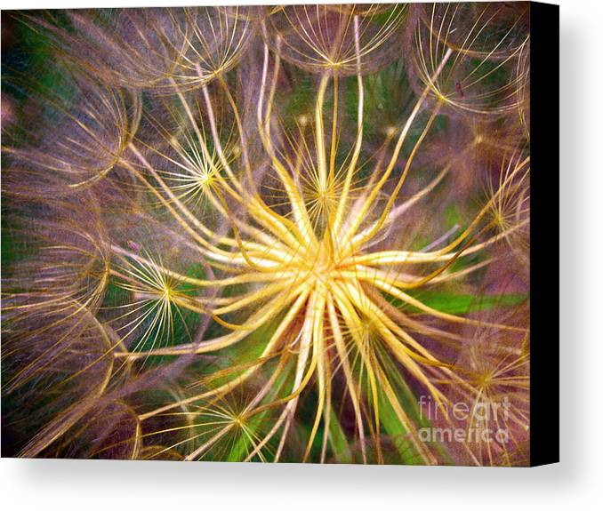 Macro Canvas Print featuring the photograph June 21 2010 by Tara Turner
