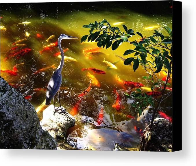 Bird Canvas Print featuring the photograph Just Looking by Blima Efraim