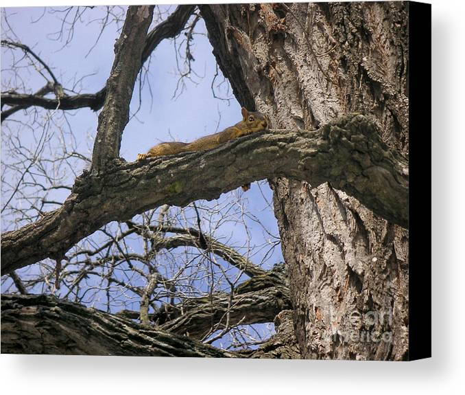 Nature Canvas Print featuring the photograph Keeping A Low Profile by Lucyna A M Green