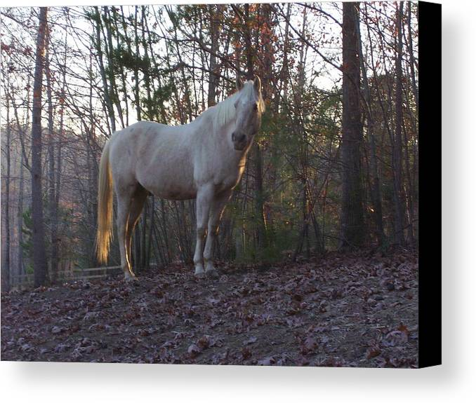 Horse Canvas Print featuring the photograph King Of The Hill by Kristen Hurley