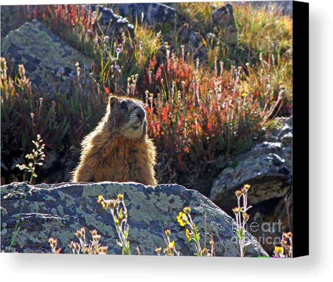 Marmot Canvas Print featuring the photograph King Of The Mountain by George Tuffy