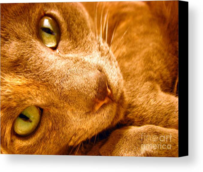 Cats Canvas Print featuring the photograph Kitty by Amanda Barcon