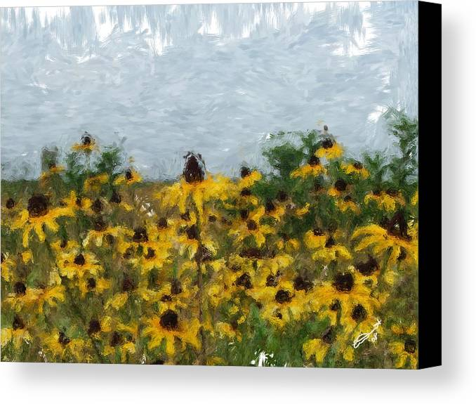 Field Black Yellow Flowers Green Painting Floral Daisies Garden Oil Eyed Impressionism Monet Canvas Print featuring the painting Krystallyn's Susans by Eddie Durrett