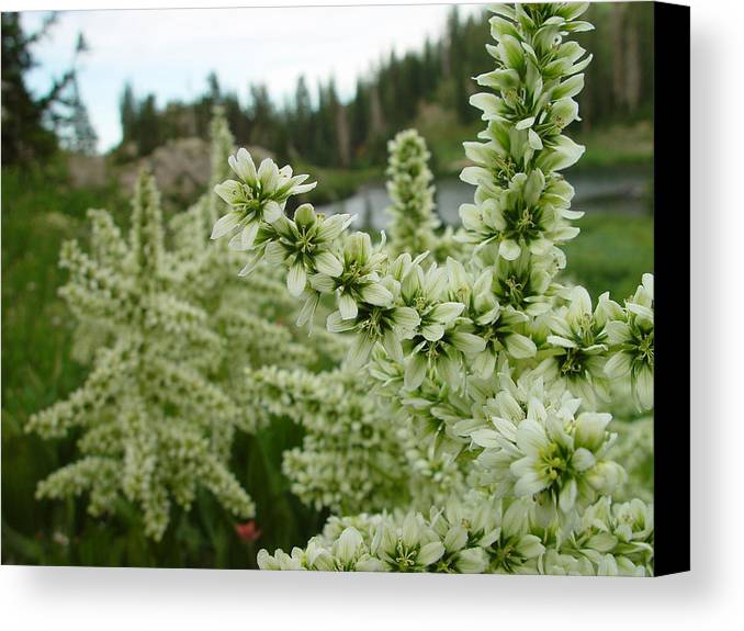 Flower Canvas Print featuring the photograph Lake Catherine Bloom by Derek Nielsen