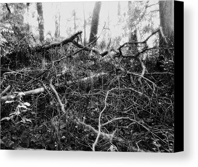 Trees Canvas Print featuring the photograph Layers Of Time Passed by Scarlett Royal