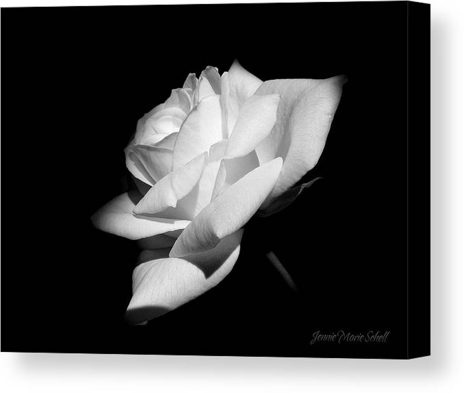 Rose Canvas Print featuring the photograph Light On Rose Black And White by Jennie Marie Schell