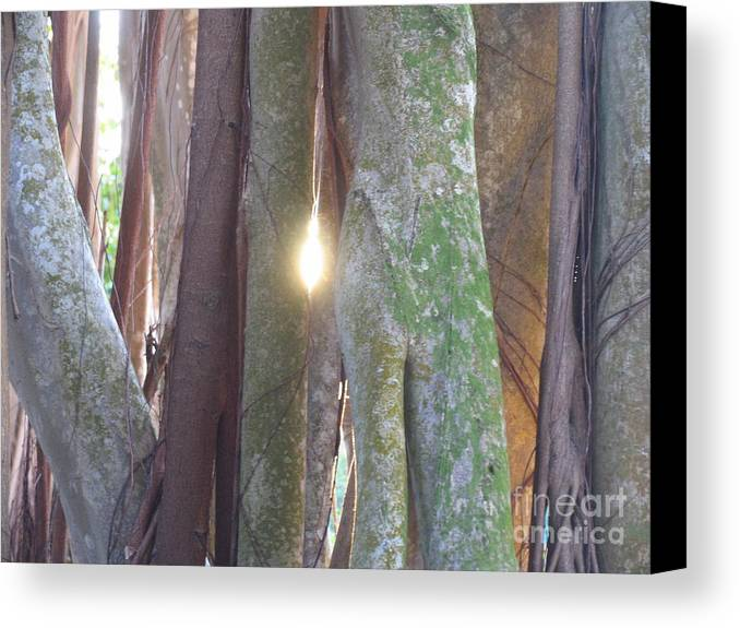 Tree Canvas Print featuring the photograph Light by Stephanie Richards