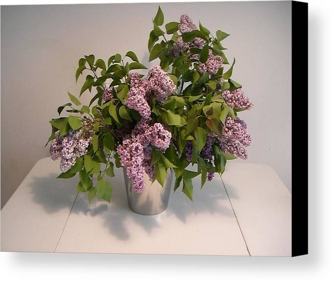 Lilacs Canvas Print featuring the photograph Lilacs by Nancy Ferrier