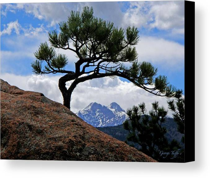 Pine Tree Longs Peak Mountain Colorado Sky Clouds Rock Canvas Print featuring the photograph Longs Peak Framed by George Tuffy