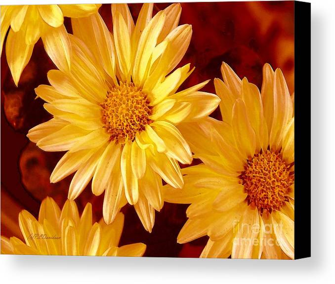Flowers Canvas Print featuring the photograph Lovely Mums by Patricia L Davidson