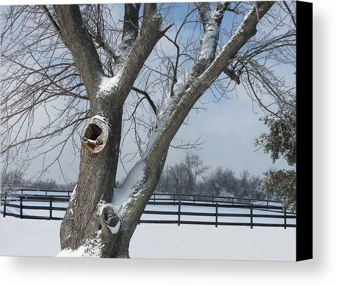 Winter Canvas Print featuring the photograph Maple In Winter by Martie DAndrea