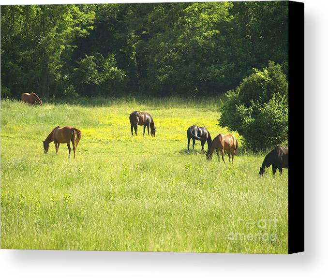 Mares Canvas Print featuring the photograph Mares Afternoon by Kim