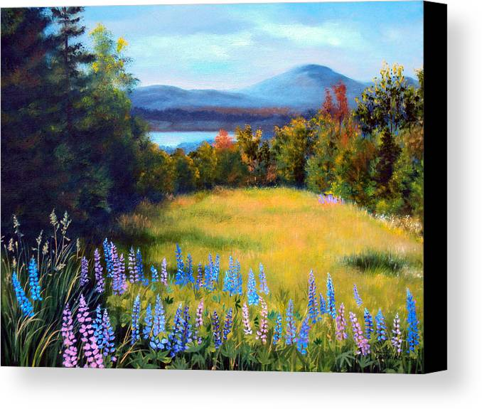 Spring Lupine Adorn The Edge Of This Hilltop Meadow Overlooking Mountains And Lakes Of Northern Maine. Canvas Print featuring the painting Meadow Lupine II by Laura Tasheiko