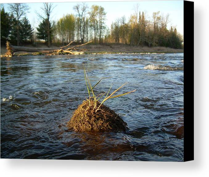 Mississippi River Canvas Print featuring the photograph Mississippi River Grass On A Rock by Kent Lorentzen