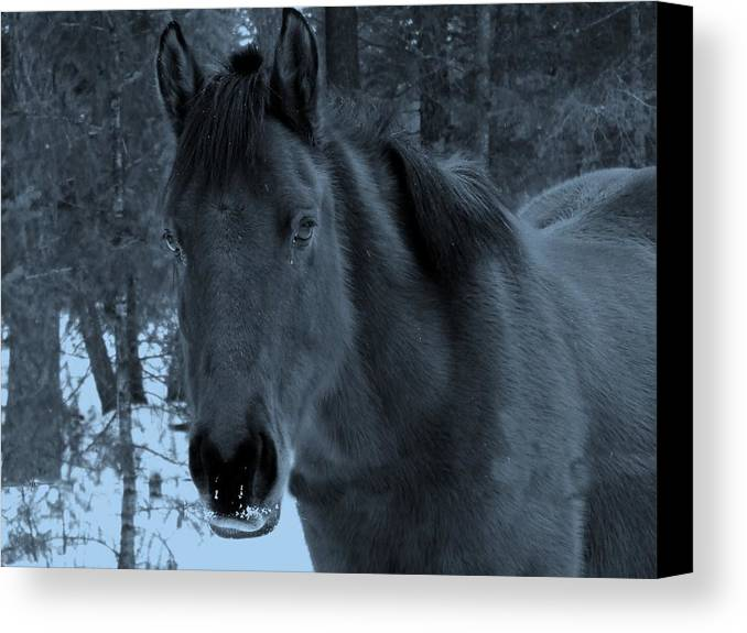 Horse Canvas Print featuring the photograph Moonlit Stallion by Tiffany Vest