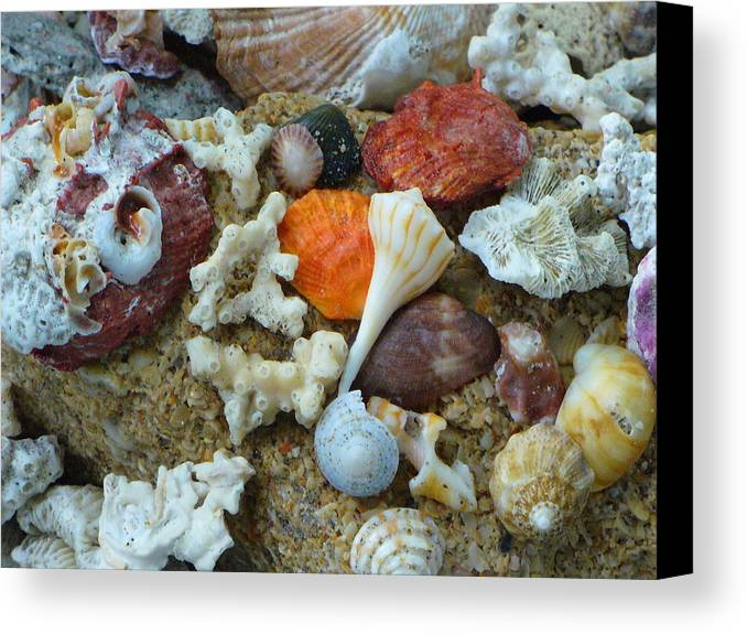 Shells Canvas Print featuring the photograph Morning Treasures by Peggy King