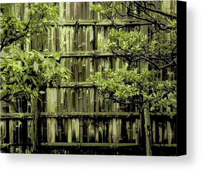 Moss Canvas Print featuring the photograph Mossy Bamboo Fence - Digital Art by Carol Groenen