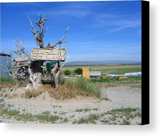 Mail Canvas Print featuring the photograph Most Unusual Mailbox by Diane Wallace