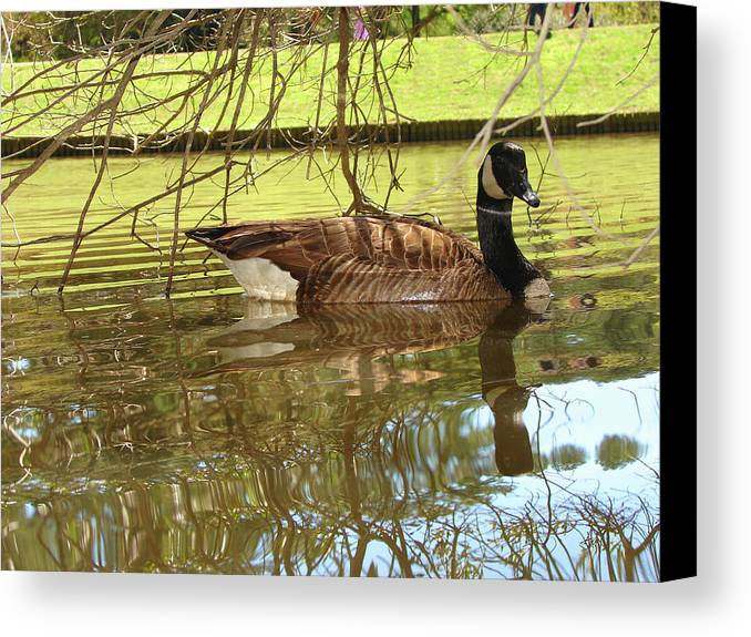 Goose Canvas Print featuring the photograph Mother Goose by Laura Brightwood