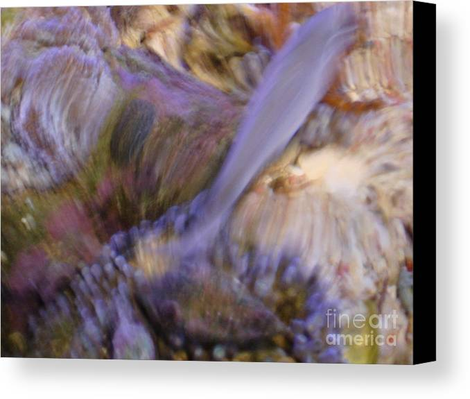 Fish Canvas Print featuring the photograph Movement by PJ Cloud