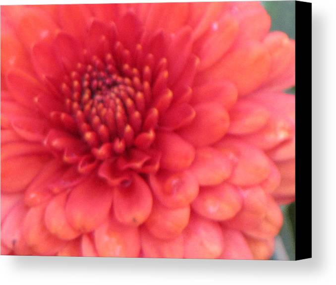 Mums Canvas Print featuring the photograph Mum Is A Beauty by Sylvia Wanty