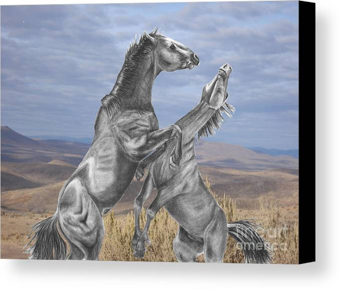 Horses Canvas Print featuring the digital art Mustang Battle by Russ Smith