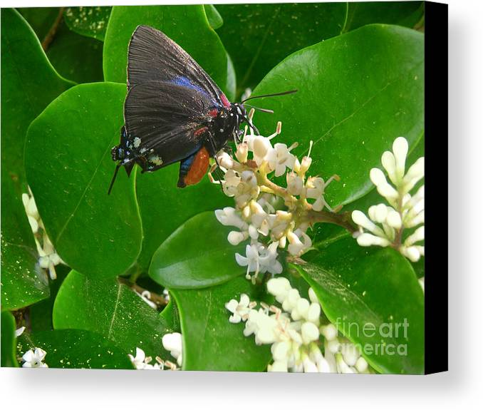 Nature Canvas Print featuring the photograph Nature In The Wild - Beautiful In Black by Lucyna A M Green