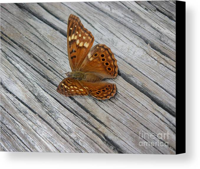 Nature Canvas Print featuring the photograph Nature In The Wild - Fall Colors by Lucyna A M Green