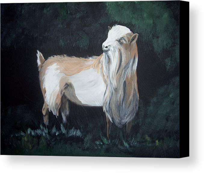 Goat Canvas Print featuring the painting Nigerian Dwarf Buck by Glenda Smith