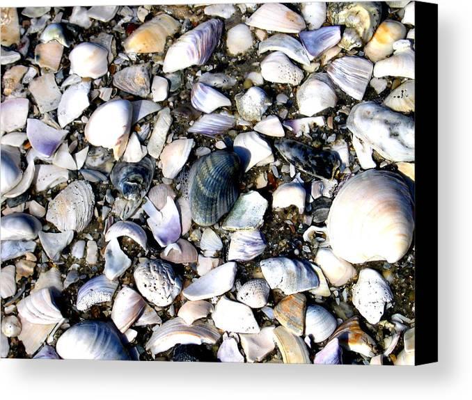 Ocracoke Canvas Print featuring the photograph Ocracoke Shells by Wayne Potrafka