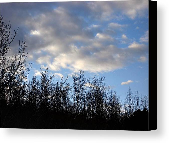 Trees Canvas Print featuring the photograph October Skies by Marilynne Bull