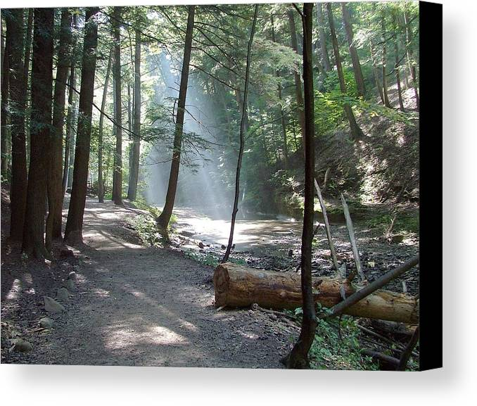Photo Canvas Print featuring the photograph Ohio Woods by Mindy Newman