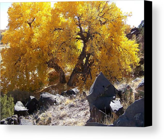 Cottonwood Tree Canvas Print featuring the photograph Old Cottonwood Below Black Rocks by Jeannie Bushman