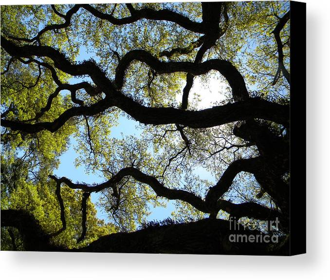 Tree. Landscape Canvas Print featuring the photograph Old Oak by JoAnn Wheeler