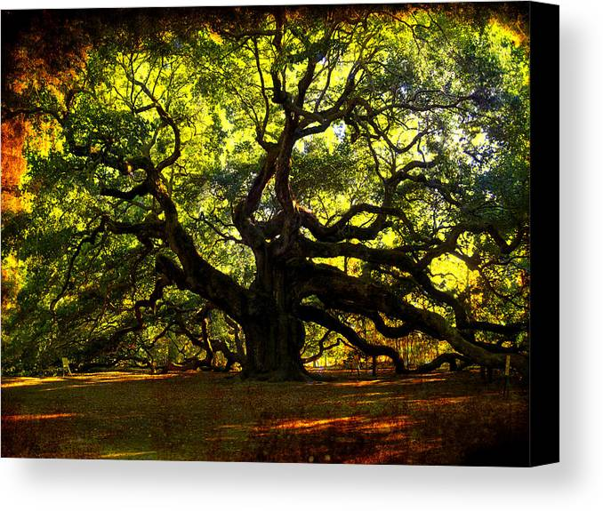 Angel Oak Canvas Print featuring the photograph Old Old Angel Oak In Charleston by Susanne Van Hulst