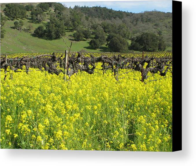 Landscape Canvas Print featuring the photograph Old Vines by Kim Pascu