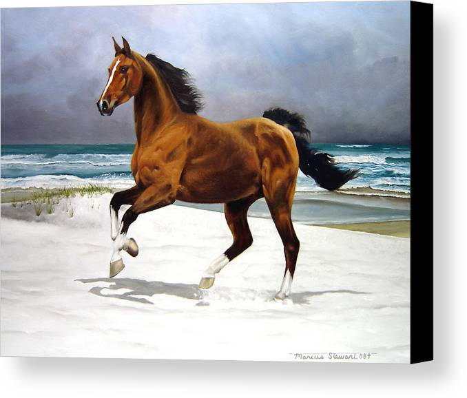 Horse Canvas Print featuring the painting On The Beach by Marc Stewart