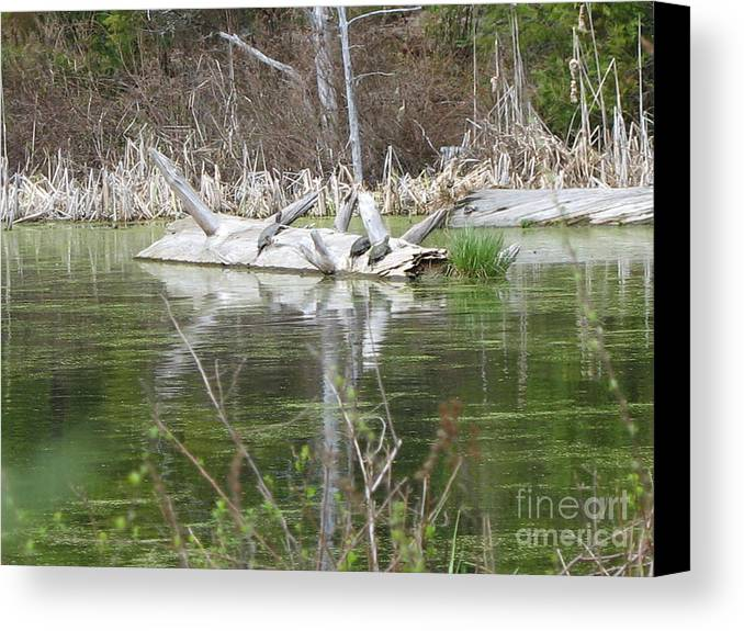 Turtle Canvas Print featuring the photograph On The Pond by Juli House