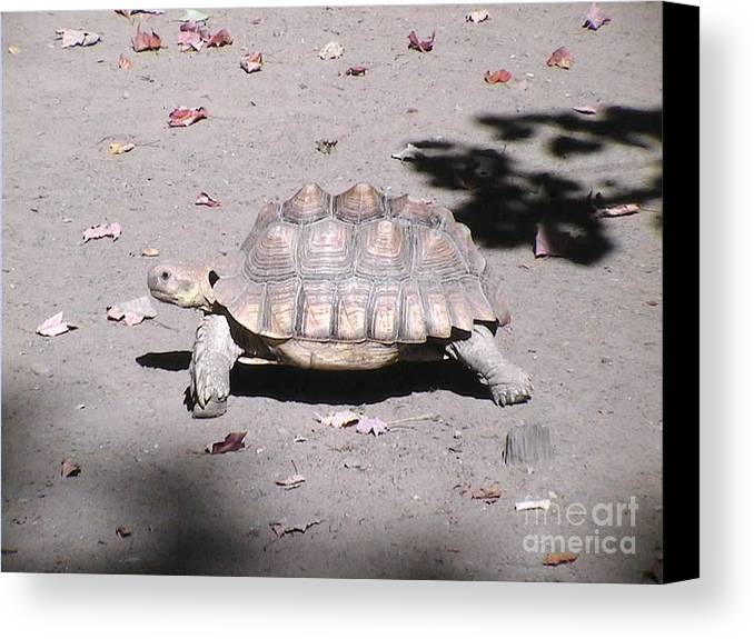 One Canvas Print featuring the photograph One Step At A Time by Daniel Henning