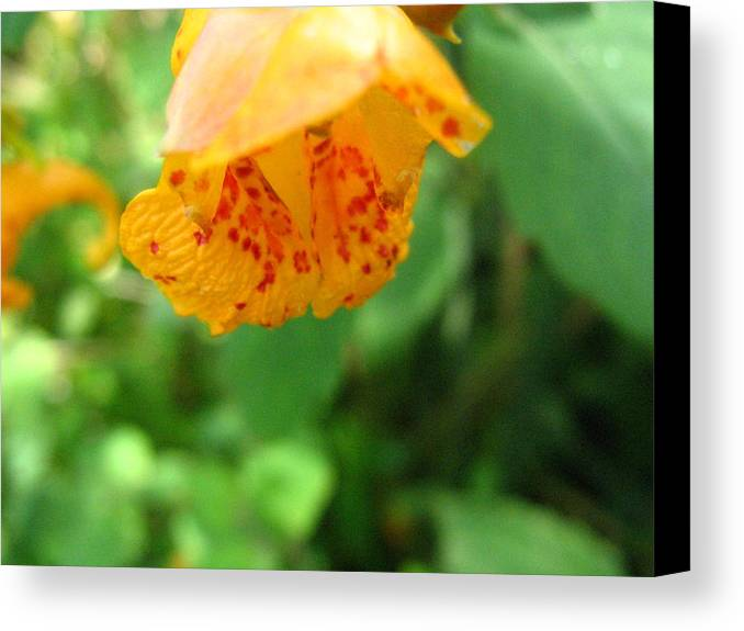 Flower Canvas Print featuring the photograph Orange Flower by Melissa Parks