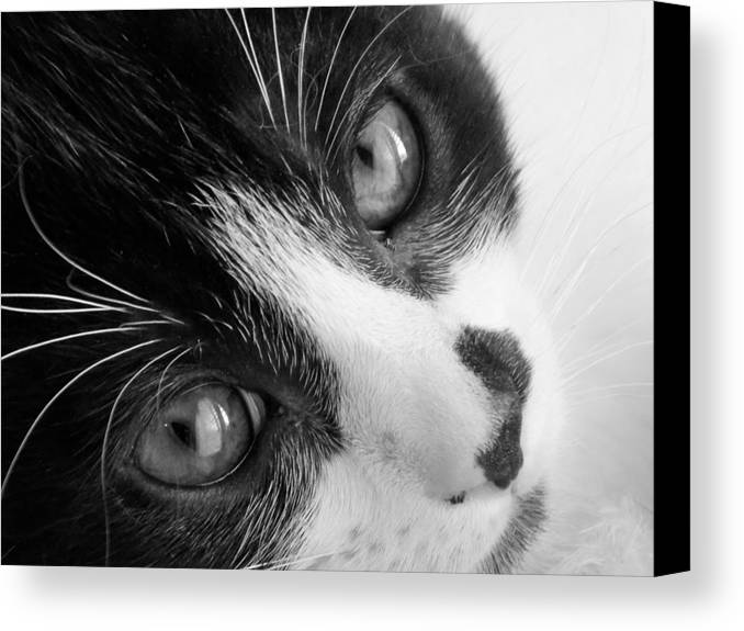 Kitten Canvas Print featuring the photograph Oreo In Black And White by Sarah Barba