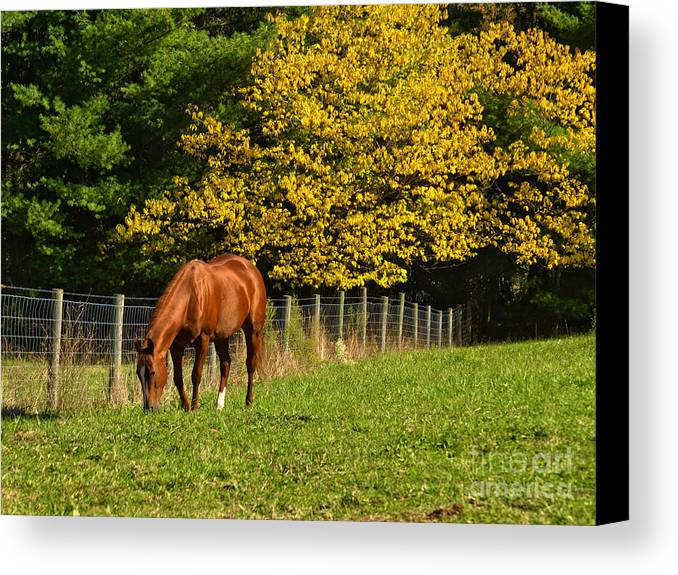 Horse Canvas Print featuring the photograph Out To Pasture by Kathy Jennings