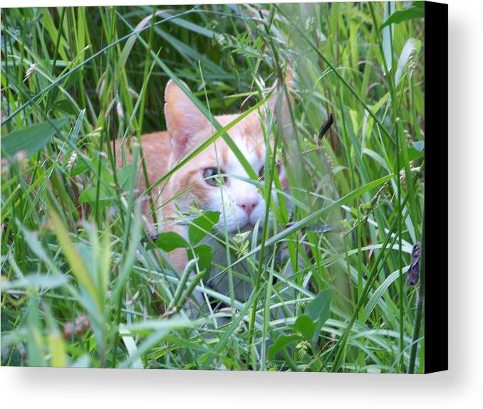 Cats Canvas Print featuring the photograph Ozzy by Jessica Burgett