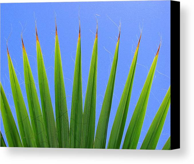 Palm Canvas Print featuring the photograph Palm 2 by Kathy Roncarati