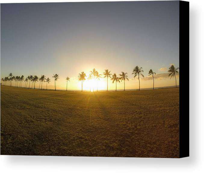 Palm Trees Canvas Print featuring the photograph Palm Tree Sunset by Megan Martens