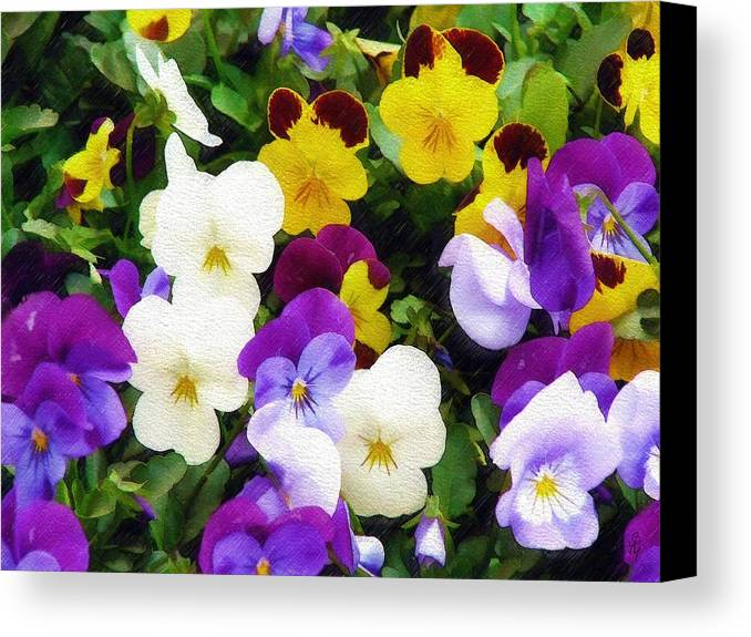 Pansies Canvas Print featuring the photograph Pansies by Sandy MacGowan